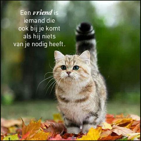 Katten gedichten 1.…