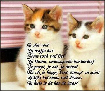 Katten gedichten 2.…